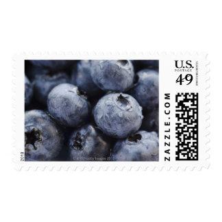 Studio shot of blueberries 3 postage