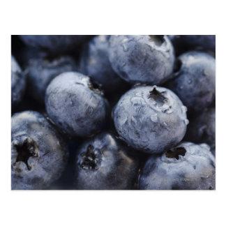 Studio shot of blueberries 3 postcard
