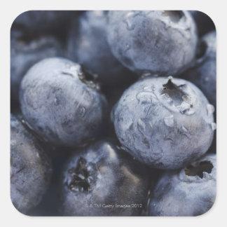 Studio shot of blueberries 3 square stickers