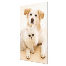 Studio shot of cat and dog canvas print