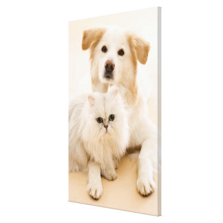 Studio shot of cat and dog canvas print