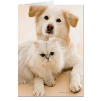 Studio shot of cat and dog greeting card