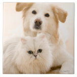 Studio shot of cat and dog large square tile