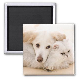 Studio shot of cat and dog magnets
