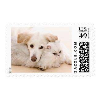 Studio shot of cat and dog postage