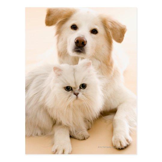 Studio shot of cat and dog postcard
