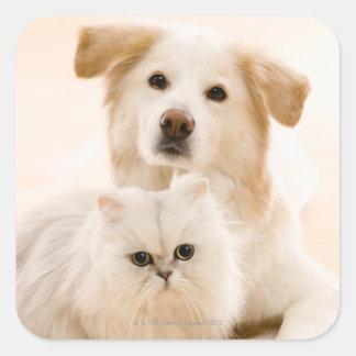 Studio shot of cat and dog square sticker
