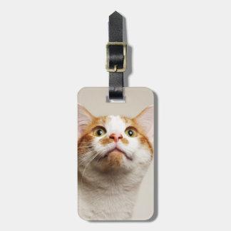 Studio shot of cat looking up bag tag