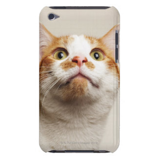 Studio shot of cat looking up iPod touch case
