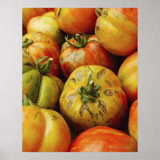 Studio shot of heirloom tomatoes poster