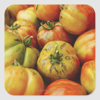 Studio shot of heirloom tomatoes square sticker