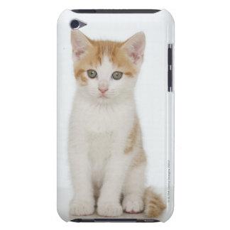 Studio shot of kitten iPod touch case