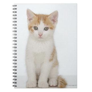 Studio shot of kitten notebooks