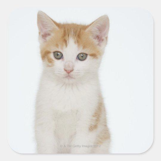 Studio shot of kitten square sticker
