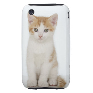 Studio shot of kitten tough iPhone 3 cases