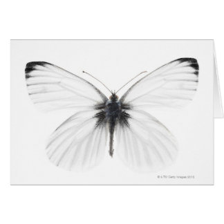 Studio shot of sharp-veined white butterfly card