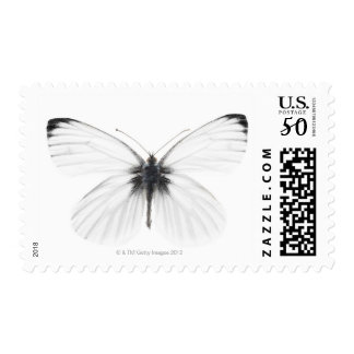 Studio shot of sharp-veined white butterfly postage