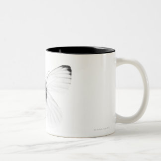 Studio shot of sharp-veined white butterfly Two-Tone coffee mug