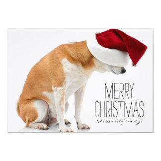 Studio shot of Shiba Inu dog wearing Santa hat Card
