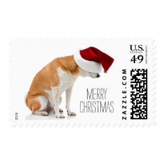 Studio shot of Shiba Inu dog wearing Santa hat Postage