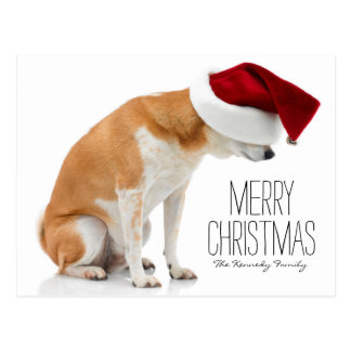 Studio shot of Shiba Inu dog wearing Santa hat Postcard