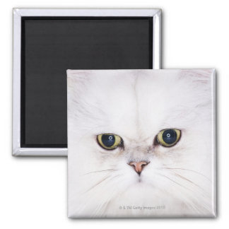 Studio shot of white Persian cat Magnet