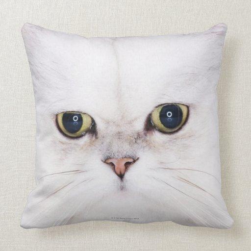 Persian Design Throw Pillows : Studio shot of white Persian cat Throw Pillow Zazzle
