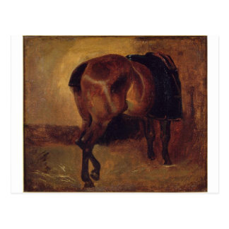 Study for Bay horse seen from behind Postcard