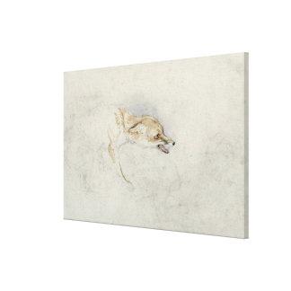 Study of a crouching Fox, facing right verso: fain Canvas Print