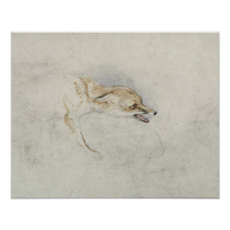 Study of a crouching Fox, facing right verso: fain Poster