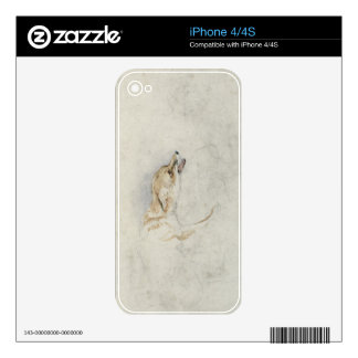 Study of a crouching Fox, facing right verso: fain Skin For The iPhone 4S