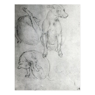 Study of a dog and a cat, c.1480 postcard