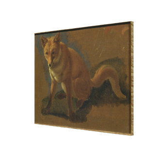 Study of a Fox (oil on panel) Canvas Print