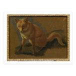 Study of a Fox (oil on panel) Postcard