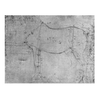 Study of a Horse Postcard