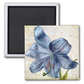 Study of a lily, 1526 2 inch square magnet
