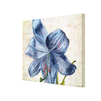 Study of a lily, 1526 canvas print