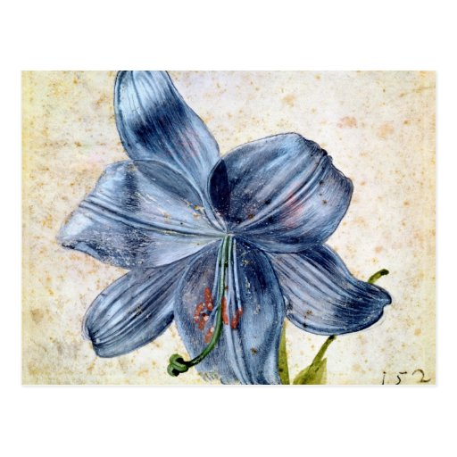 Study of a lily, 1526 postcards