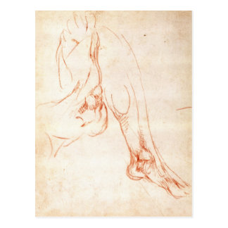 Study of a lower leg and foot postcard