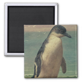 Study of a Penguin 2 Inch Square Magnet