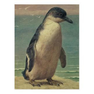 Study of a Penguin Postcard