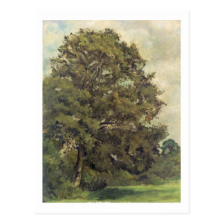 Study of an Ash Tree, c.1851 (oil on paper on pane Postcard