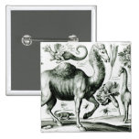 Study of Animals and Flowers, engraved Pinback Buttons