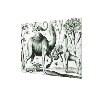 Study of Animals and Flowers, engraved Canvas Print