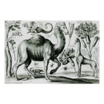 Study of Animals and Flowers, engraved Poster
