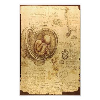 Study of baby fetus by Leonardo da Vinci Photo Print