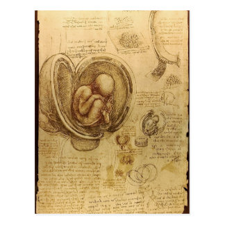 Study of baby fetus by Leonardo da Vinci Postcard