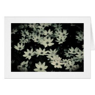 Study of Coreopsis in Black and White Card