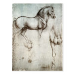 Study of horse. postcard