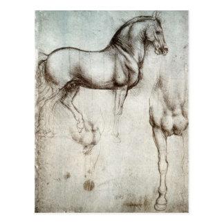 Study of horses - Leonardo da Vinci Postcards
